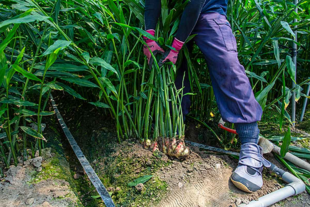 健全な土壌を追求するため、環境保全・生態系維持などの取り組み