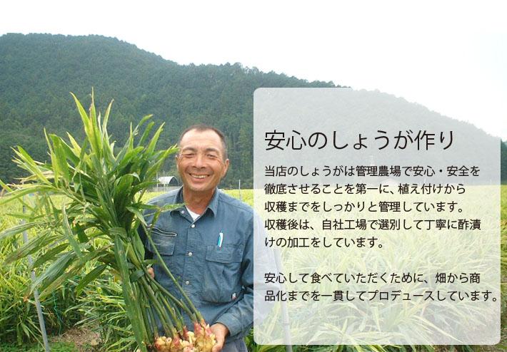 選べる酢漬け 生姜栽培