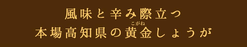 高知県黄金しょうが