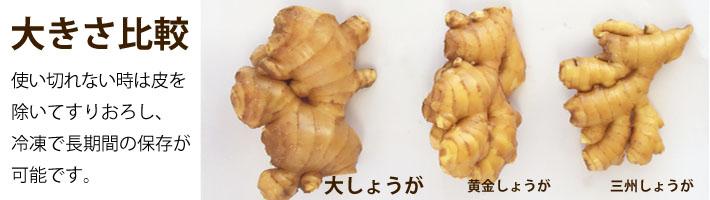大生姜カテゴリー